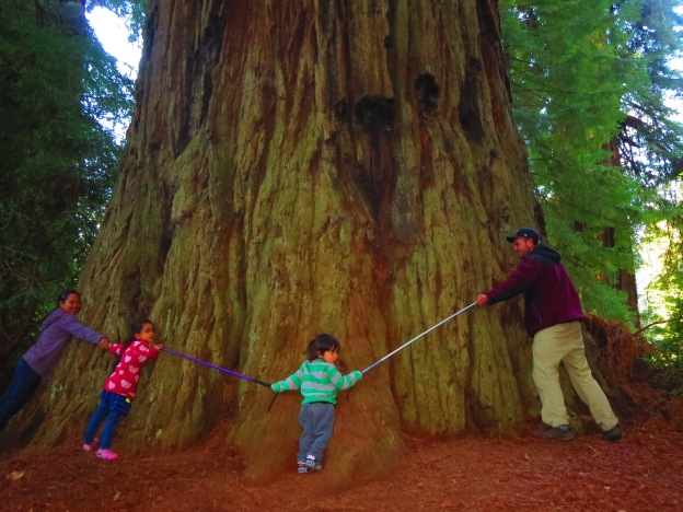 One of my favorite photos from this summer.  Even with reaching around with both My cane and Marley's cane, we still barely manage to make it halfway around that giant redwood tree.