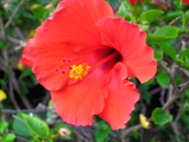 Here's a lovely photo of a flower from our Honeymoon in Hawaii
